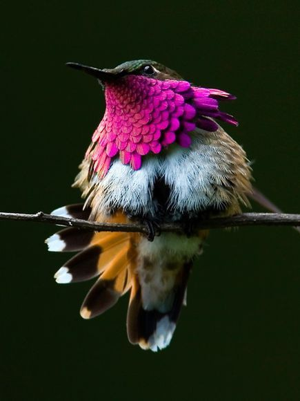 bright colours on bird